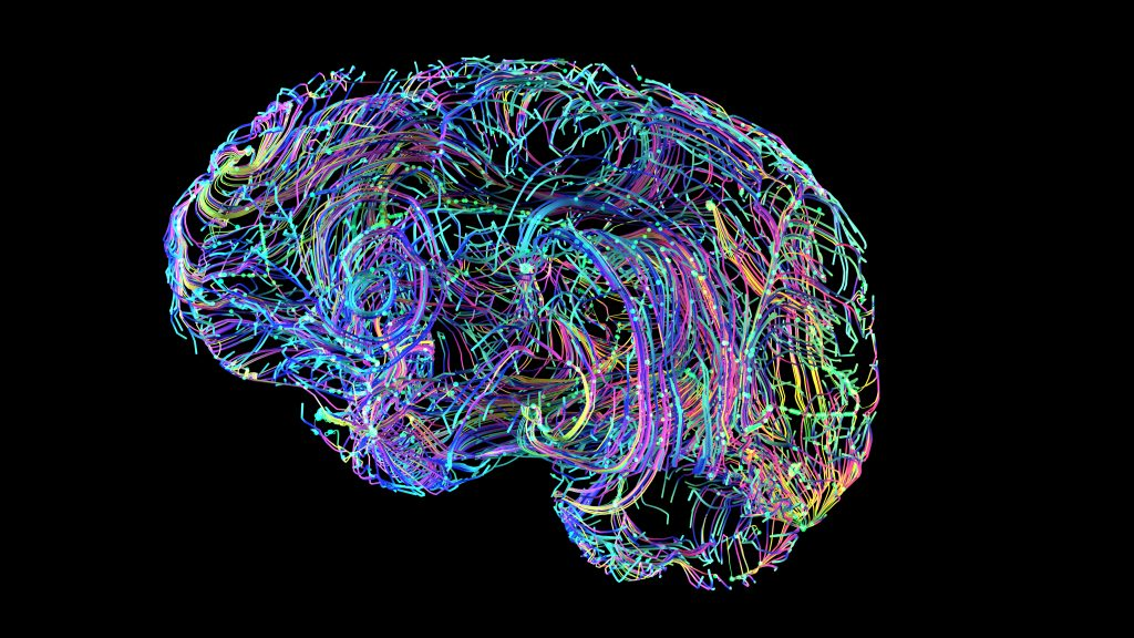 en illustration av hjärnan där många linjer i olika färger ska representerar alla de olika kopplingar mellan hjärnans olika delar och celler
