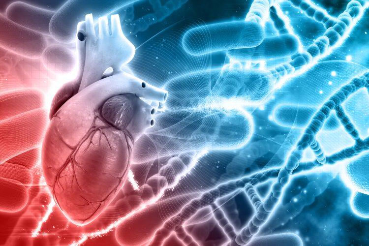 en 3D-illustration av ett hjärta i vänstra nedre hörnet tonat i rött. En dna-spiral ses i den högra delen av bilden och den är färgad i blått