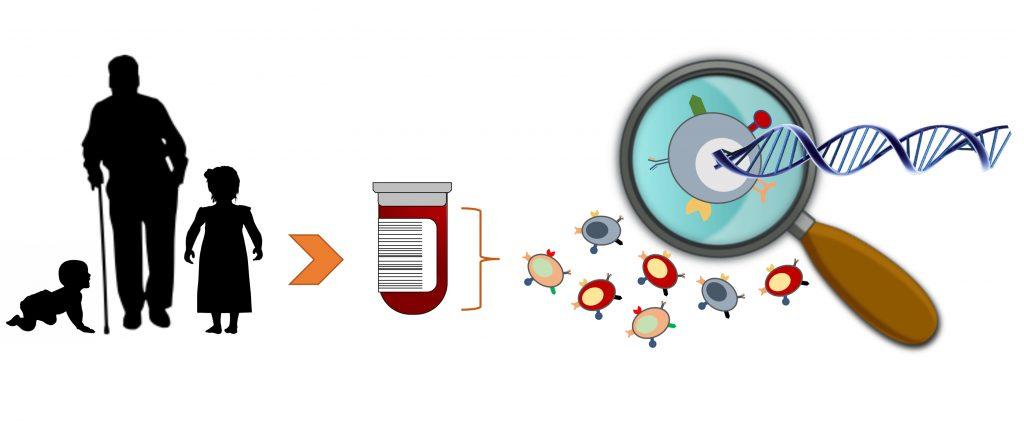 """Bildens syfte är att på ett enkelt och övergripande sätt illustrera metoden """"singelcellsekvensering"""". Till vänster i bilden ses siluetter av en baby, en gammal person som stödjer sig på käpp och ett äldre barn. En pil pekar mot nästa sekvens i bilden som är ett provrör med blod i och en streckkod på sidan. Den sista sekvensen längst till höger visar 8 olika celler varav en ses genom ett förstoringsglas. Ur cellen dras ut en DNA-spiral"""